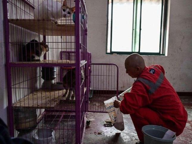 Một vị thầy chăm sóc hàng nghìn động vật bị bỏ rơi tại Trung Quốc ảnh 1