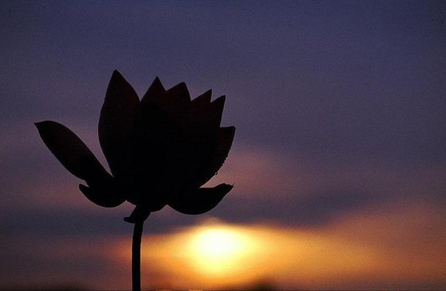 Niết-bàn & sanh tử đều là hoa đốm giữa hư không ảnh 1