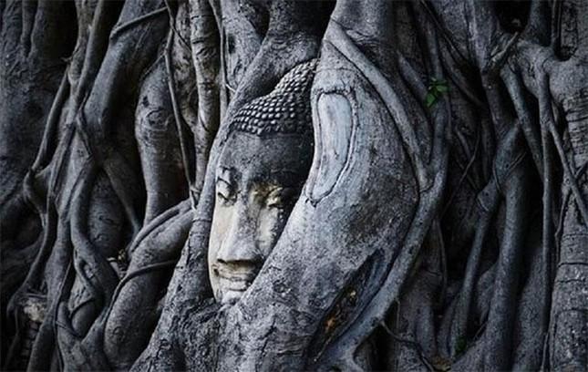 Kỳ lạ bức tượng Phật nằm trong hốc cây hơn 1.000 năm tuổi ảnh 2