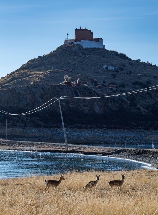 Ngắm những hình ảnh về ngôi chùa độc đáo ở Tây Tạng ảnh 6