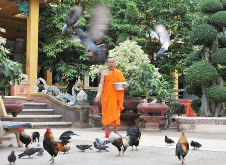 Độc đáo chùa Kompông Chrây ảnh 4