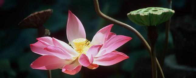 slide-lotus.jpg
