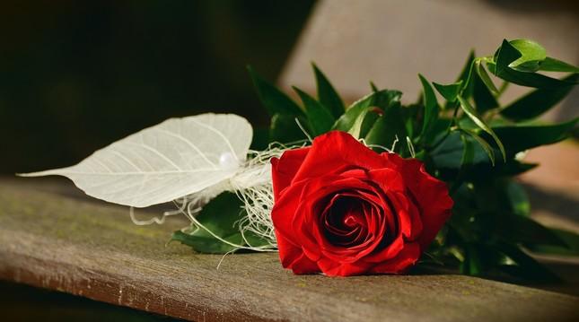 rose-1711224_1280.jpg