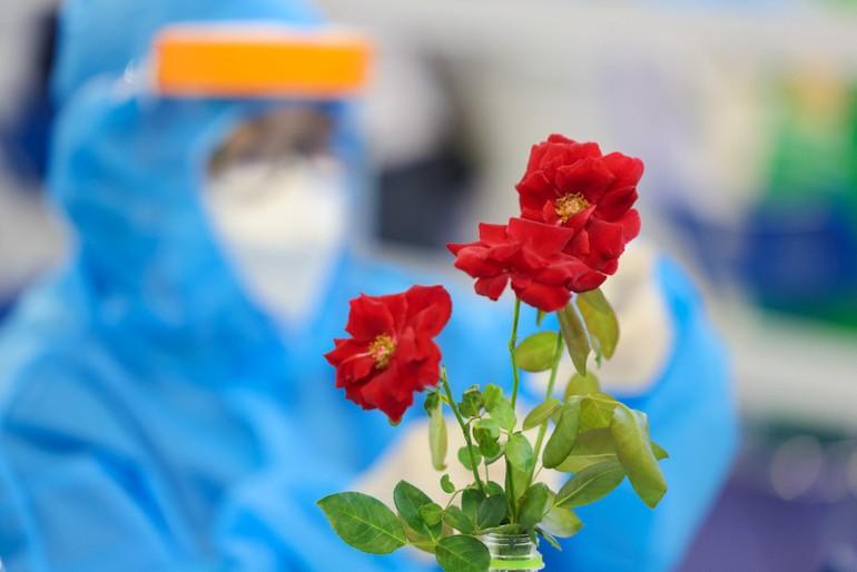 Những cánh hồng đỏ thắm giữa không khí căng thẳng của nhà thi đấu Phú Thọ