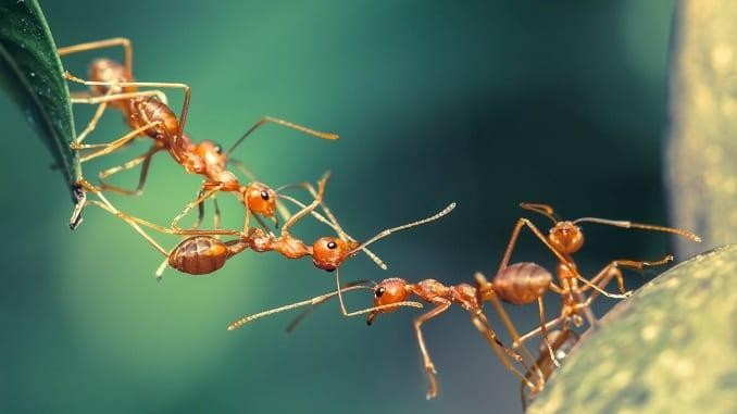 Sinh hoạt của một đàn kiến - Ảnh minh họa
