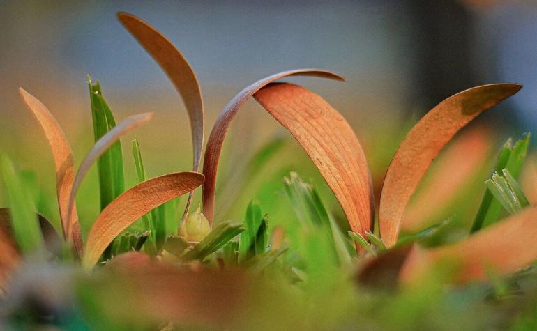 Sài Gòn mùa hoa dầu bay - Ảnh VnExpress