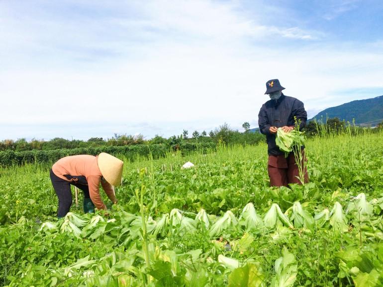 Chung tay thu hoạch nông sản hỗ trợ người dân TP.HCM